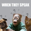 Cats, Dogs and Monkeys Speak About The Startup World!